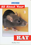 All About Your Rat