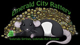 Emerald City Rattery