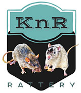 KnR Rattery of Oregon
