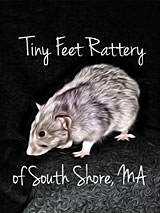 Tiny Feet Rattery of South Shore, MA