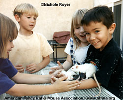 Four kids with rats