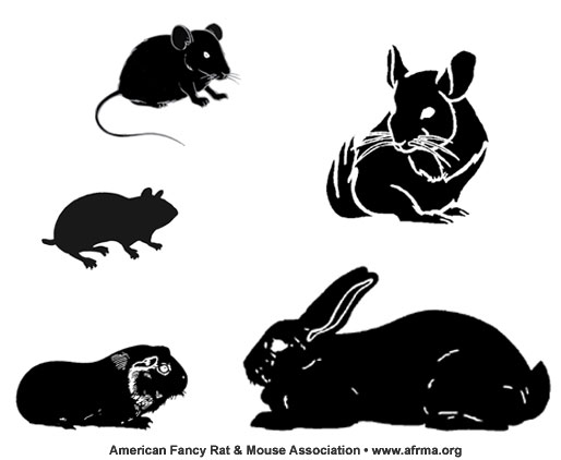 Black Rodents