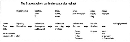 Figure Color Loci Act
