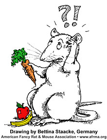 Rat with carrot