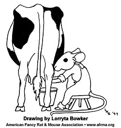 Mouse milking cow