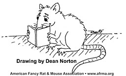 Rat reading book