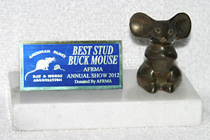 Best Stud Buck Mouse
