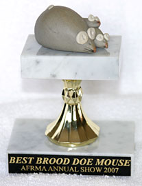 Best Brood Doe Mouse