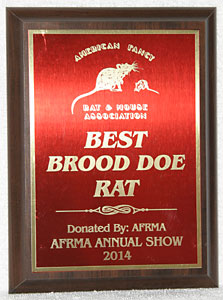 Best Brood Doe Rat