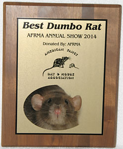 Best Dumbo Rat