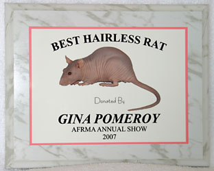 Best Hairless Rat