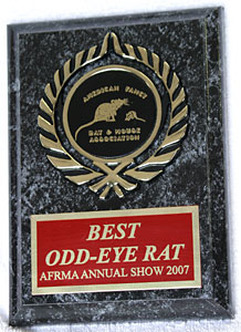 Best Odd-Eye In Show Rat