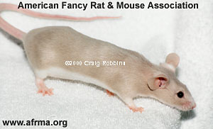 Beige Fox Mouse